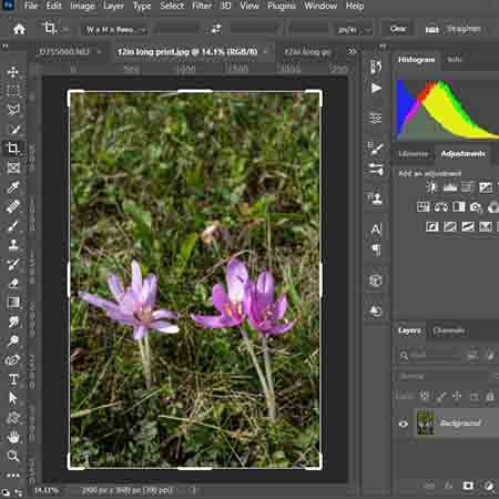 How to crop a picture – 2 simple ways