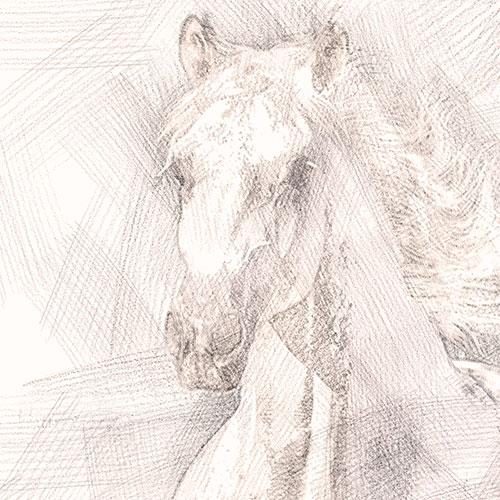 Digital Drawing - Horse - detail