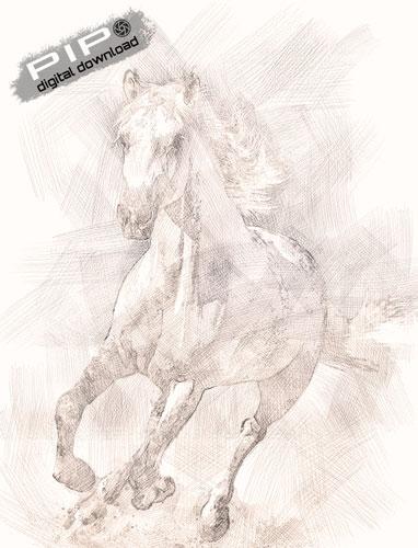 Digital Drawing - Horse
